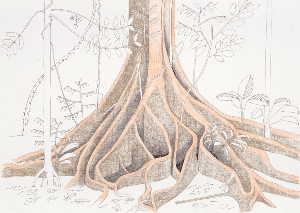 Francis Hallé, Base d'un arbre indéterminé, forêt de Pakitza, Amazonie péruvienne, 2012. Crayon et encre sur papier, 30 × 42 cm. Collection Francis Hallé, Montpellier. © Francis Hallé