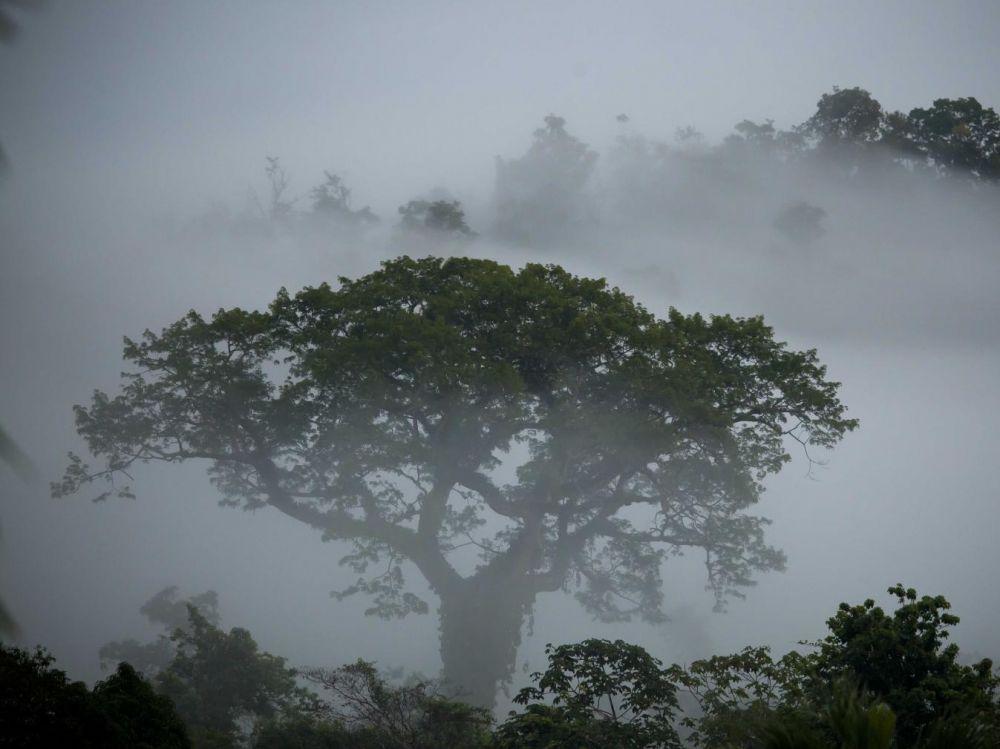 Humidité dans le parc amazonien de Guyane. JOBARD:COEURS DE NATURE:SIPA